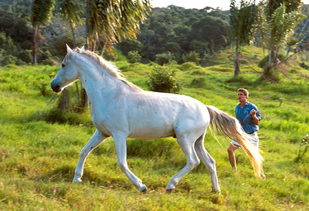 Beautiful white horse on the field