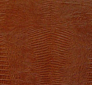 Texture of lizard leather